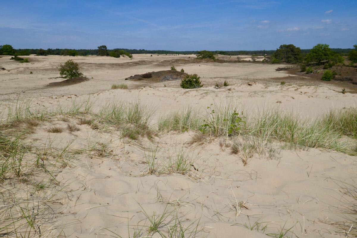 Kootwijk – Veluwe: zand, heide en radio