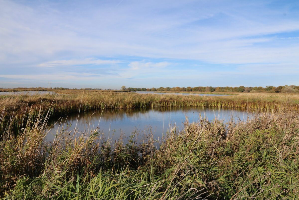 OV-Fietsrondje Weesp – Rond het Naardermeer